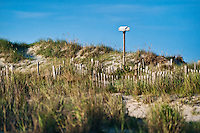 Bird house in coastal sand dunes, Outer Banks, North Carolina, USA