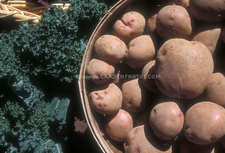 Potatoes and kale from the garden, bushel basket after harvest