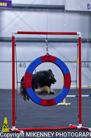 CPE Agility Trial Keld June 8th 2013 at Boomtowne Canine Campus in Farmington NY