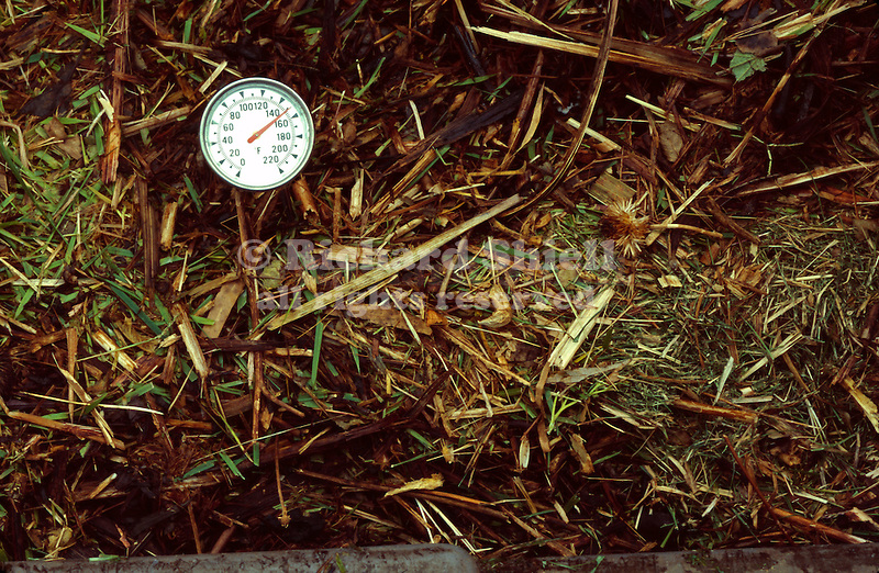 16968-QD Compost cooking by bacterial action at 150ºF, with Compost Thermometer, in gray plastic Compost Bin, in October at Bakersfield, CA USA