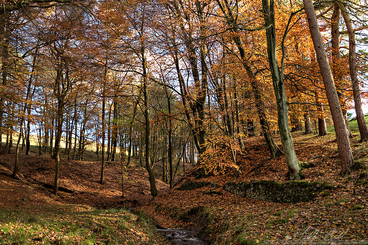 Autum Woodland in the Peak District
