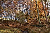 Autum Woodland in the Peak District