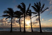 Palm Trees at Sunrise, Fort Lauderdale Beach, Florida, FL, America, USA.