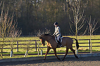 Young woman rides Cleveland Bay Cross Thoroughbred horse, Oxfordshire, United Kingdom.