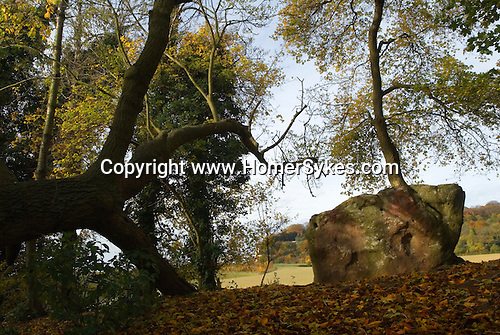 Medway Megaliths. Upper White Horse Stone. Blue Bell Hill,  Near Aylesford, Kent. Neolithic Chamber Tomb, said to be a monument to the Saxon  leader Horse, who was the  King of Kent. Stands in Westfield Wood off the Pilgrims Way.