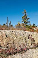 Acadia landscape, Acadia NP, Maine, ME, USA