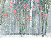 Marek, CHRISTMAS LANDSCAPES, WEIHNACHTEN WINTERLANDSCHAFTEN, NAVIDAD PAISAJES DE INVIERNO, photos+++++,PLMP0163,#xl#