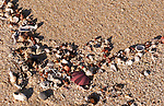 On The Beach 02 - Shells and marine life washed up on Moses Rock beach, Western Australia