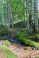 Europe/France/Aquitaine/64/Pyrénées-Atlantiques/Pays-Basque/Soule/Plateau d'Iraty: Forêt de hêtres d'Iraty et torrent