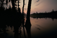 Sun rises through cypress trees in Billys Lake on the west side of the Okefenokee Swamp.