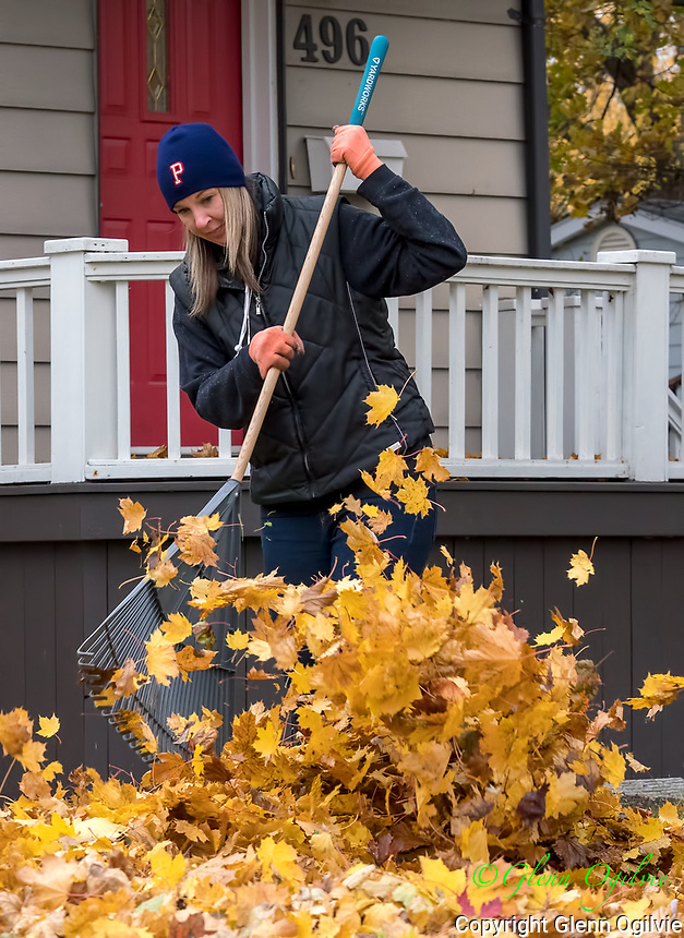 """Tricia Gibbs, of Superior Street expected to spend a full day raking leaves and expects to rake again when more leaves accumulate. <br /> <br /> She said it's been difficult to stay on top of the leaf raking because """"it's been so rainy and wet."""" <br /> <br /> She also said trees are a 'blessing and a curse""""  because they provide shade in the summer, but have to raked in the fall."""