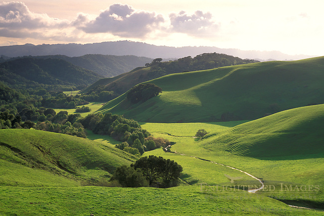 Oak trees, green grass hills over stream water in valley in spring at sunset, Briones Regional Park, Contra Costa County, California