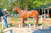 Havre De Grace is Horse of the Year