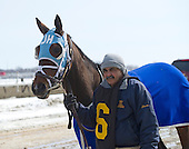 Cat Cay Stakes - Shayjolie - Sheldon Russells' 1000th win