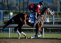 Verrazano, trained by Todd Pletcher, trains for the Breeders' Cup Dirt Mile at Santa Anita Park in Arcadia, California on October 30, 2013.