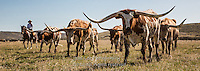 Long drive Cowboys working and playing. Cowboy Cowboy Photo Cowboy, Cowboy and Cowgirl photographs of western ranches working with horses and cattle by western cowboy photographer Jess Lee. Photographing ranches big and small in Wyoming,Montana,Idaho,Oregon,Colorado,Nevada,Arizona,Utah,New Mexico.