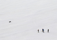 Skiiers and their dogs enjoy the spring snow in the Beartooth.