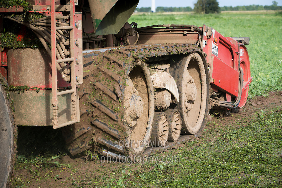 Pea vining with PMC harvester fitted with tracks - Lincolnshire, August