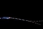 Shrimp w long antennae, Black Water diving over Gulfstream Current; Plankton; SE Florida Atlantic Ocean; larval fish; pelagic larval marine life; plankton creatures; vertical migration marine creatures