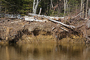 River bank erosion along the Swift River in the White Mountains, New Hampshire USA.