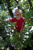 Two year old girl climbing in a tree, France.