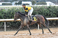 HOT SPRINGS, AR - FEBRUARY 19: Seven Trumpets with jockey Bobby Albarado cooling down after the Southwest Stakes at Oaklawn Park on February 19, 2018 in Hot Springs, Arkansas. (Photo by Ted McClenning/Eclipse Sportswire/Getty Images)