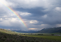 A rainbow hits the Lamar Valley.