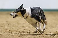 2014 Minnesota Stock Dog Trials