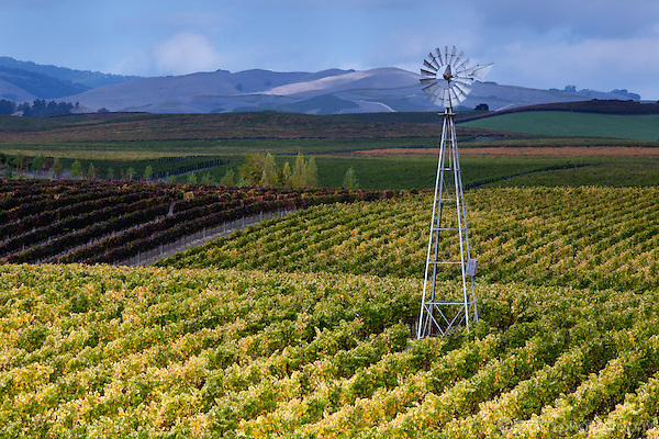 Windmill in vineyard in Napa
