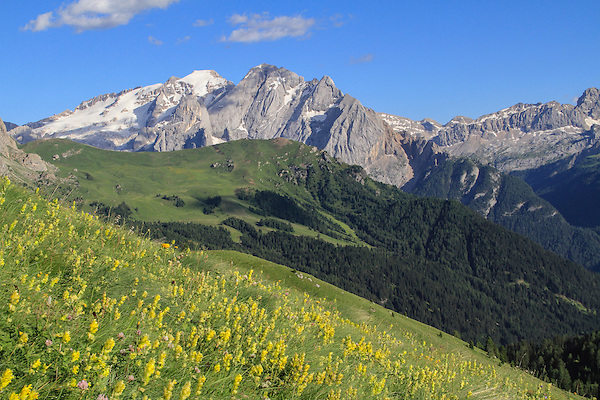 Italy, Dolomites.  <br /> Foreground that gently slopes uphill makes positioning of foreground (theses flowers) relative to the background much easier. If the flowers sloped downhill, you'd have little control. <br /> Classic landscape from Passo Pordoi, with Mt Marmolada in the Dolomites, northern Italy, Europe.