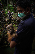 1 year old Orang-utan, Gokong clutches to his caretaker, Arista Ketaran at the Batu Mbelin Quarantine Centre for Orang-utan in Deli Serdang district in Sumatra, Indonesia.