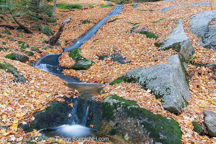 Autumn leaf drop along Clough Mine Brook in Kinsman Notch in North Woodstock, New Hampshire during the autumn months.