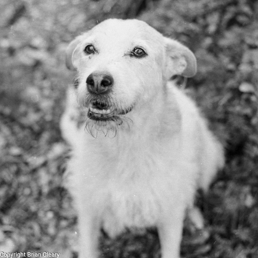 Willow the dog, Holly Hill, Floirda, July 2017.  Photo taken with a vintage Canon AE1 SLR 35mm film camera, on Fujicolor 200 c41 film processed in Kodak D76 black and white developer.  (Photo by Brian Cleary/ www.bcpix.com )