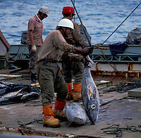 Removing frozen tuna fish from cold storage on korean fishing boat to fish processing plant, Pago Pago, American Samoa, 1980.