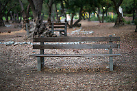 Bench in the olive grove, Aug. 29, 2012.  (Photo by Marc Campos, Occidental College Photographer)