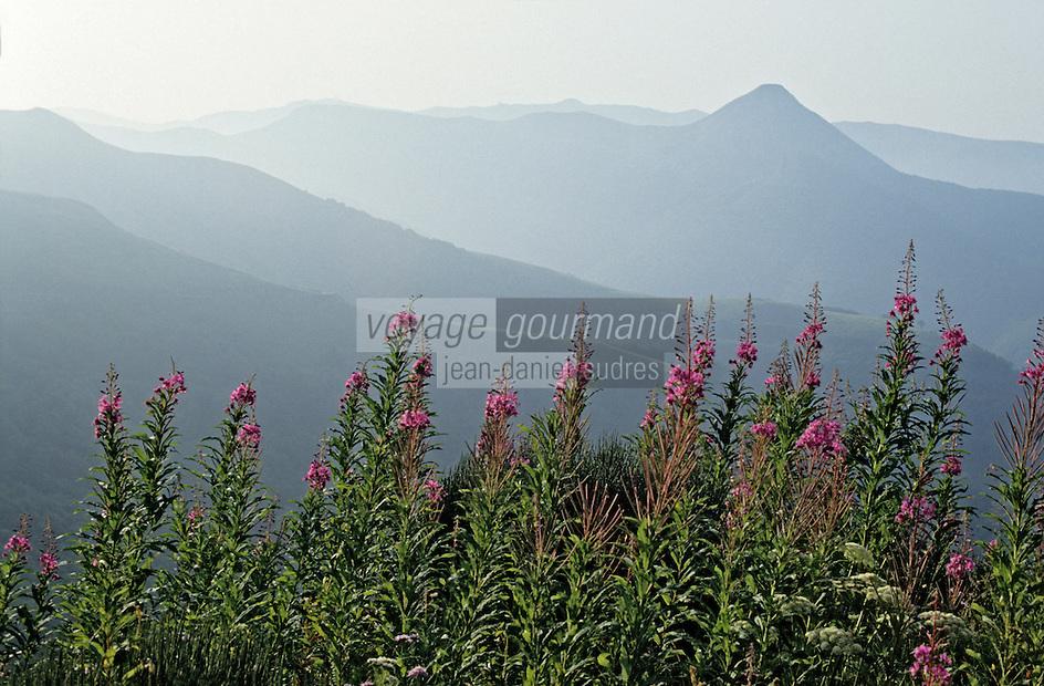 Europe/France/Auvergne/15/Cantal/Parc Régional des Volcans/Massif du Puy Griou (1694 mètres): la vallée de Mandailles