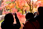 Tourists taking pictures of bright red autumn Japanese gardens at Tofukuji temple in Kyoto, Japan 2017.