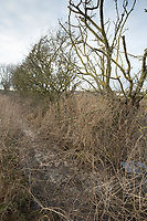 Slurry running into a dyke <br /> &copy;Tim Scrivener Photographer 07850 303986<br /> ....Covering Agriculture In The UK....