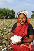 INDIA Maharashtra, cotton farming in Vidarbha region , women harvest cotton / INDIEN Maharashtra, Frauen ernten Baumwolle