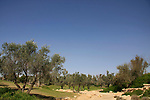 Israel, Northern Negev Mountain. The graves of David Ben-Gurion and Paula Ben-Gurion: a landscaped garden in the desert..