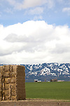 Eastern Oregon, Grant County, Pacific Northwest, U.S.A., ranch country, baled hay, Blue Mountains, spring,