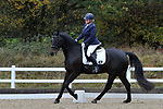 Class 5. Elementary 43. British Dressage. Brook Farm training centre. Essex. UK. 11/11/2017. ~ MANDATORY CREDIT Garry Bowden/Sport in Pictures - NO UNAUTHORISED USE - +44 7837 394578