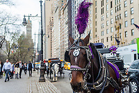 New York, NY - 31 March 2016 - Carriage horse with purple plume awaits customers on Central Park South. ©Stacy Walsh Rosenstock