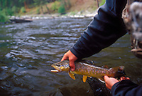 A fly fisherman shows off a brown trout he caught on Rock Creek near Missoula, Montana.