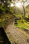 Kawaikoi Stream Trail, Na Pali-Kona Forest Reserve, Kauai, Hawaii
