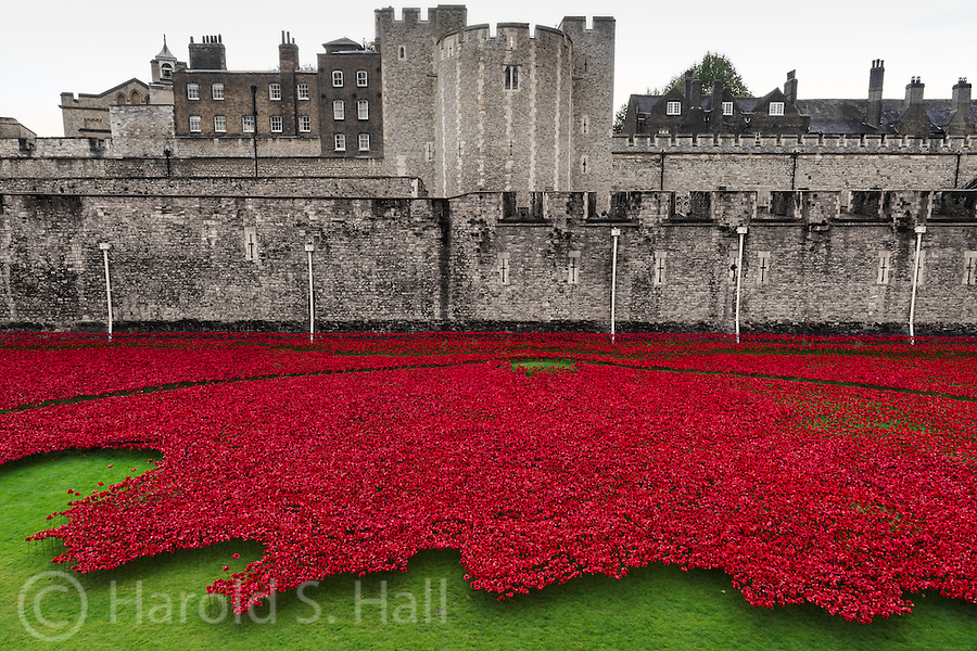 At the Tower of London is a temporary display of 888,246 unique, hand made ceramic poppies. Each poppy represents a British death in the First World War. This is an evolving installation as more poppies are planted every day by volunteers.  Upon completion, the Blood Swept Lands and Seas of Red covered the entire lawn.  This display is scheduled to be taken down November 12, 2014 and each poppy was sold for 35 British pounds.