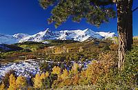 San Juan Mountains and Aspen trees in fallcolor at sunrise, Dallas Divide, Ouray, Rocky Mountains, Colorado, USA