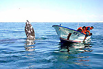 MARINE BIOLOGISTS SEARCH WATER FOR WHALE WHICH IS BEHIND THEM WAVING