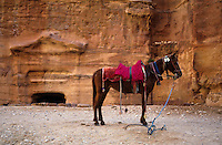 Lone horse waiting for near the El Khazneh Treasury, Petra, Jordan.