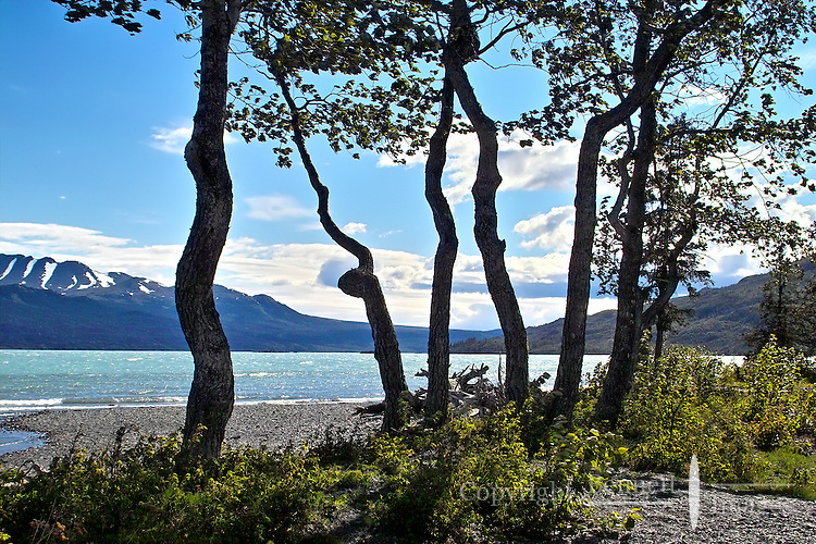 Trees twisted by countless windstorms frame the view of Skilak Lake, in Alaska's Kenai National Wildlife Refuge.